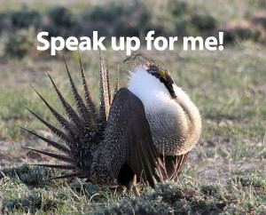 sage-grouse alert